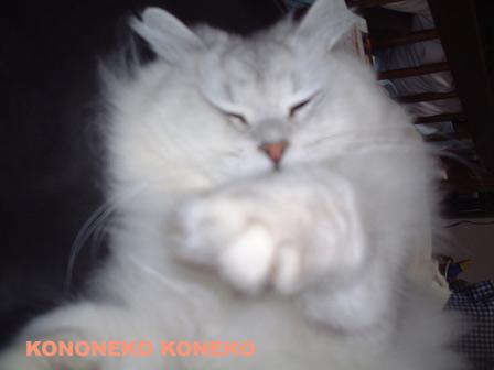この猫仔猫-バニラ142-