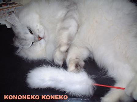 この猫仔猫-バニラ143-