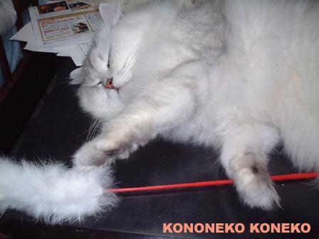 この猫仔猫-バニラ145-