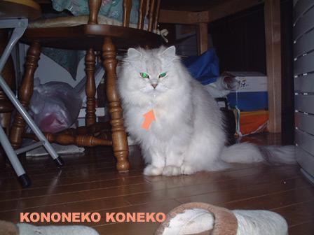 この猫仔猫-バニラ148-