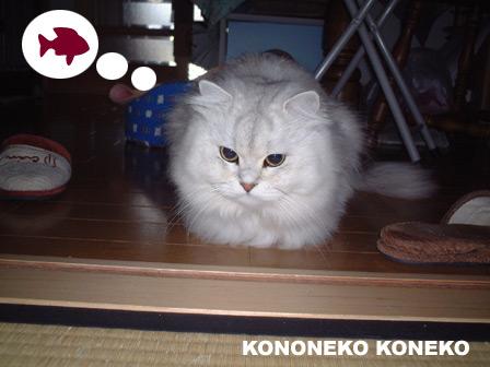 この猫仔猫-バニラ165-