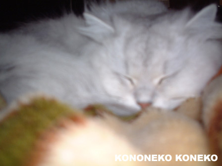 この猫仔猫-バニラ167-