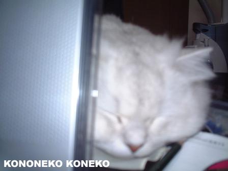 この猫仔猫-バニラ169-