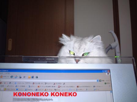 この猫仔猫-バニラ170-
