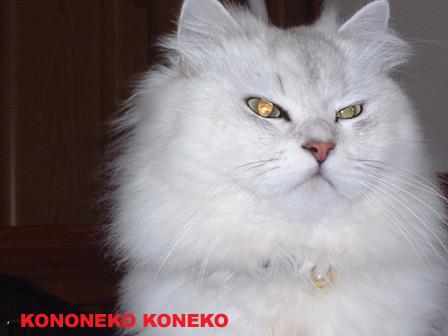 この猫仔猫-バニラ171-
