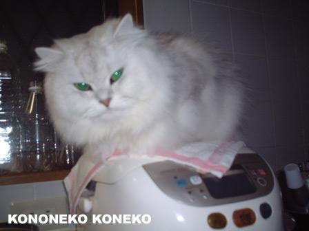 この猫仔猫-バニラ174-