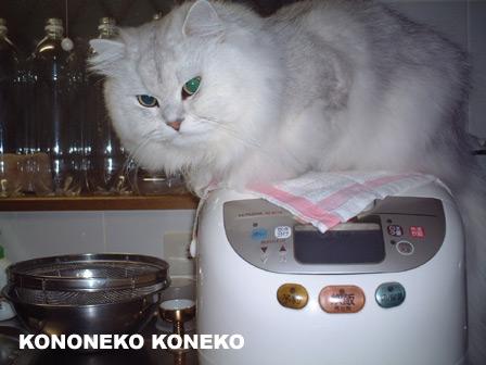 この猫仔猫-バニラ175-