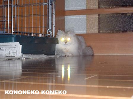 この猫仔猫-バニラ176-