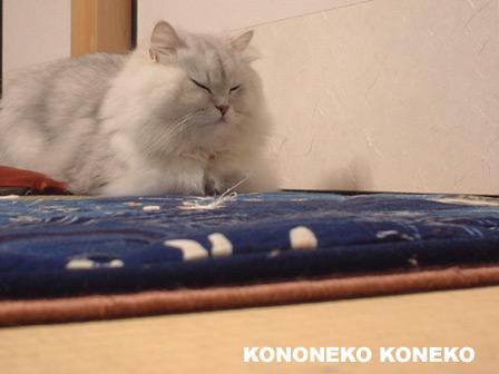 この猫仔猫-バニラ177-