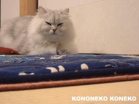 この猫仔猫-バニラ178-