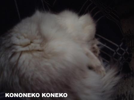 この猫仔猫-バニラ179-