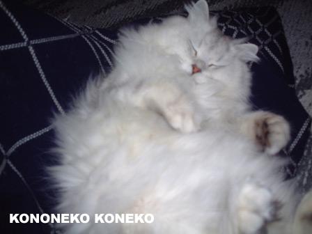 この猫仔猫-バニラ180-