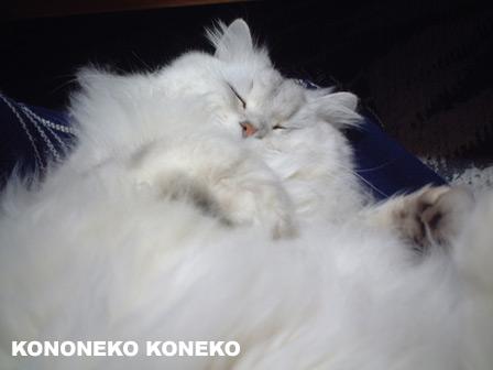 この猫仔猫-バニラ181-