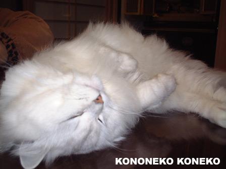 この猫仔猫-バニラ185-