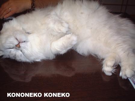 この猫仔猫-バニラ186-
