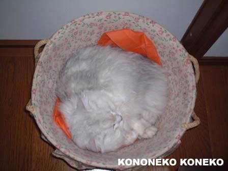 この猫仔猫-バニラ190-