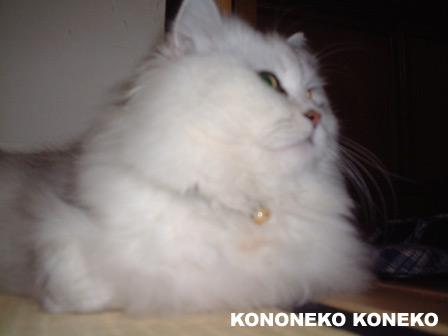 この猫仔猫-バニラ191-