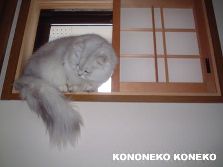 この猫仔猫-バニラ192-