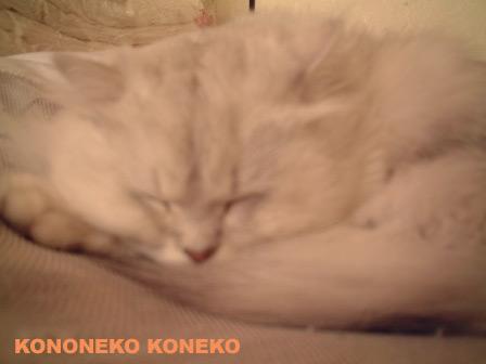 この猫仔猫-バニラ196-