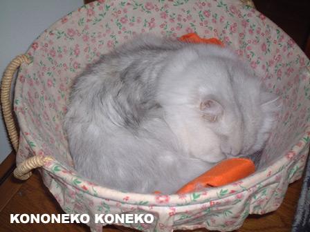 この猫仔猫-バニラ202-
