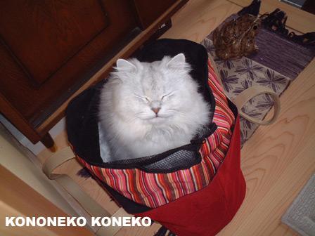 この猫仔猫-バニラ203-