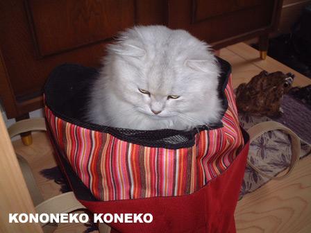 この猫仔猫-バニラ204-