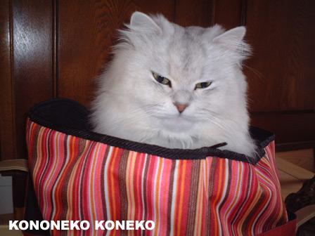 この猫仔猫-バニラ205-