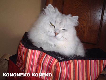 この猫仔猫-バニラ206-
