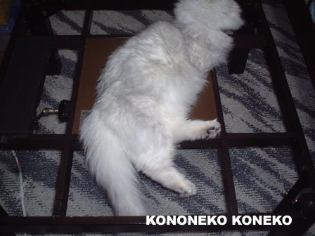 この猫仔猫-バニラ207-