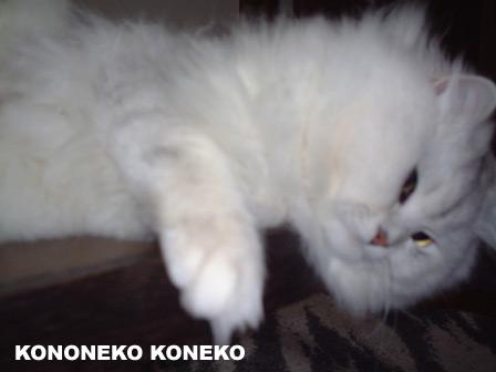 この猫仔猫-バニラ209-