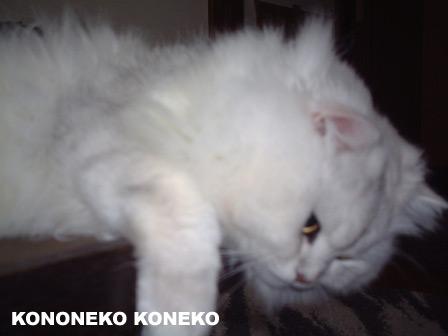 この猫仔猫-バニラ210-
