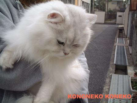 この猫仔猫-バニラ211-