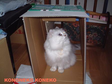 この猫仔猫-バニラ214-