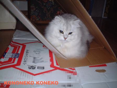 この猫仔猫-バニラ216-