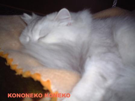 この猫仔猫-バニラ219-