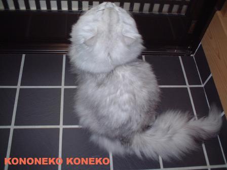 この猫仔猫-バニラ223-