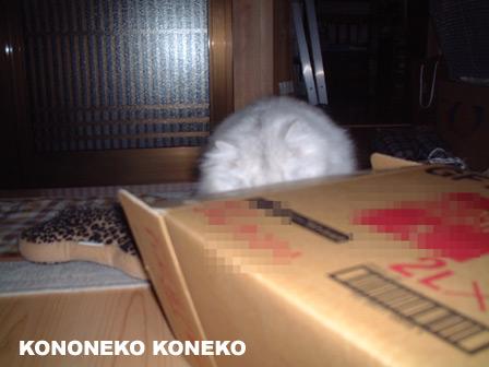 この猫仔猫-バニラ226-
