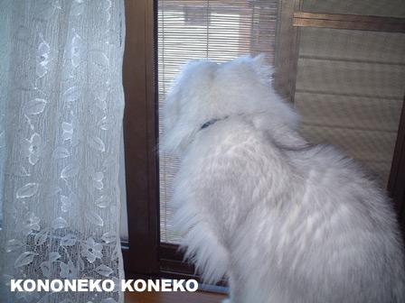 この猫仔猫-バニラ234-