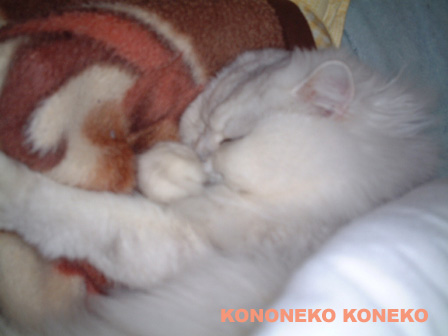 この猫仔猫-バニラ255-