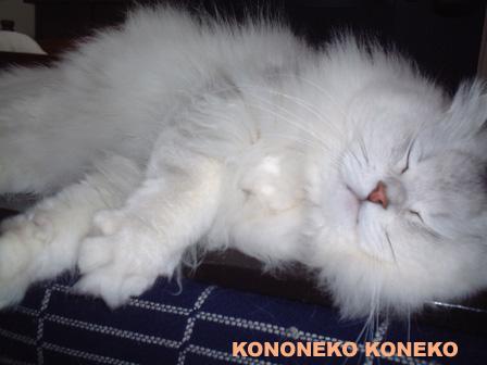 この猫仔猫-バニラ274-