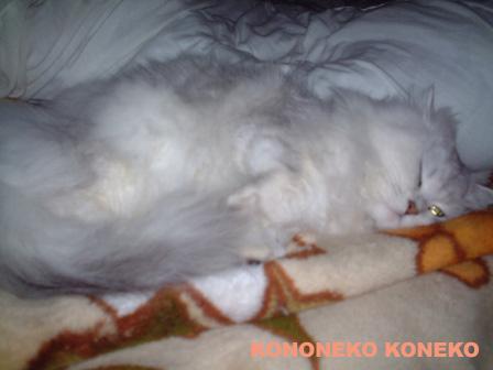 この猫仔猫-バニラ275-