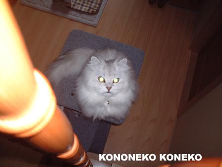 この猫仔猫-バニラ279-