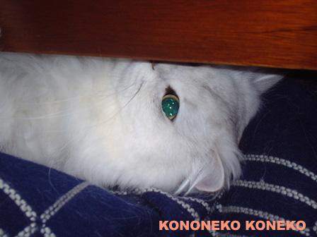 この猫仔猫-バニラ281-