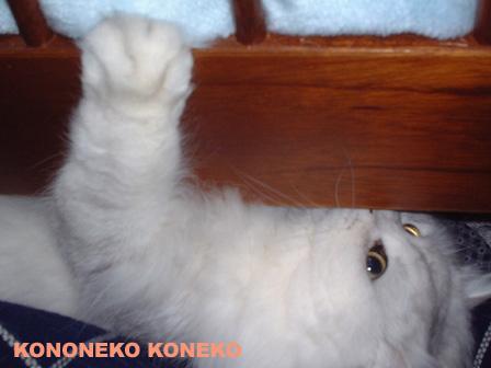 この猫仔猫-バニラ283-