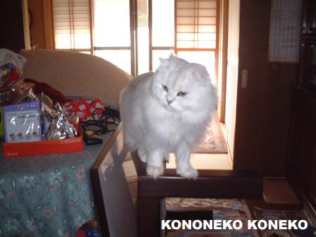 この猫仔猫-バニラ289-