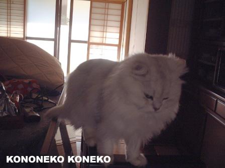 この猫仔猫-バニラ290-
