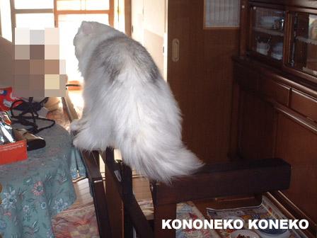 この猫仔猫-バニラ291-