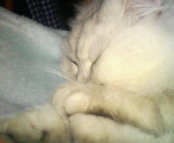 この猫仔猫-バニラ304-