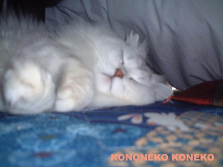 この猫仔猫-バニラ308-