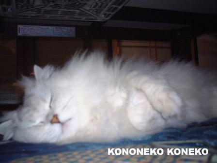 この猫仔猫-バニラ322-